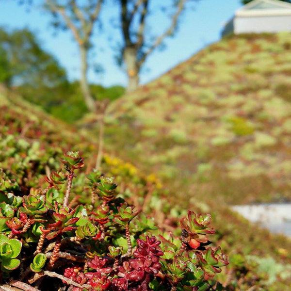ECOSEDUM PACK- zelená střecha- využití v praxi