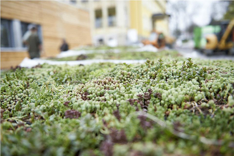 zelená střecha ECOSEDUM PACK osázený